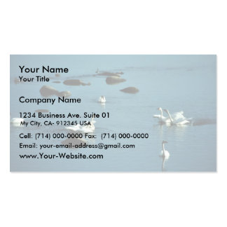 Tundra Swans on Water Pack Of Standard Business Cards