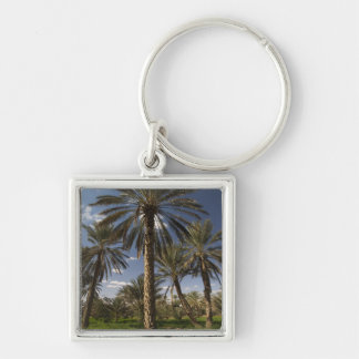Tunisia, Ksour Area, Ksar Ghilane, date palm 2 Key Ring