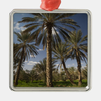 Tunisia, Ksour Area, Ksar Ghilane, date palm 2 Silver-Colored Square Decoration