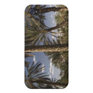 Tunisia, Ksour Area, Ksar Ghilane, date palm iPhone 4 Cover