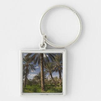 Tunisia, Ksour Area, Ksar Ghilane, date palm Key Ring