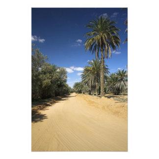 Tunisia, Ksour Area, Ksar Ghilane, date palm Photograph