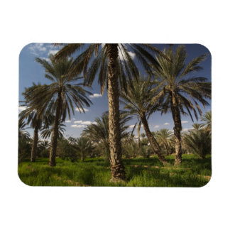 Tunisia, Ksour Area, Ksar Ghilane, date palm Rectangular Photo Magnet