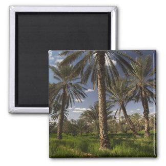 Tunisia, Ksour Area, Ksar Ghilane, date palm Square Magnet