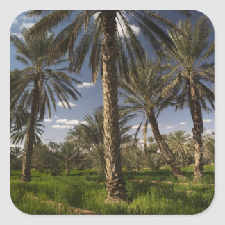 Tunisia, Ksour Area, Ksar Ghilane, date palm Square Sticker