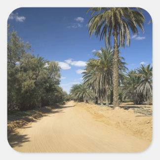 Tunisia, Ksour Area, Ksar Ghilane, date palm Sticker