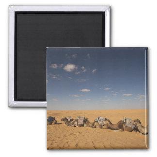 Tunisia, Ksour Area, Ksar Ghilane, Grand Erg 2 Refrigerator Magnet