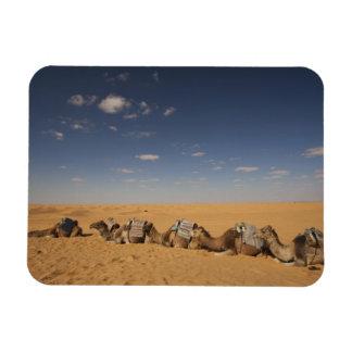 Tunisia, Ksour Area, Ksar Ghilane, Grand Erg 2 Rectangular Photo Magnet