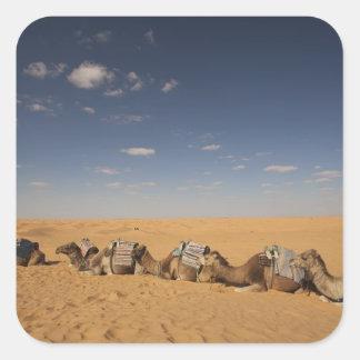 Tunisia, Ksour Area, Ksar Ghilane, Grand Erg 2 Square Sticker