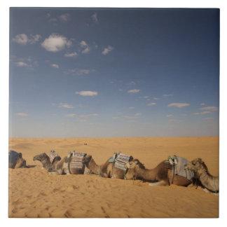 Tunisia, Ksour Area, Ksar Ghilane, Grand Erg 2 Tile