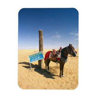 Tunisia, Ksour Area, Ksar Ghilane, horse in the Magnet