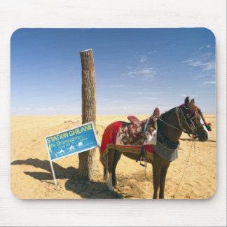 Tunisia, Ksour Area, Ksar Ghilane, horse in the Mouse Mat