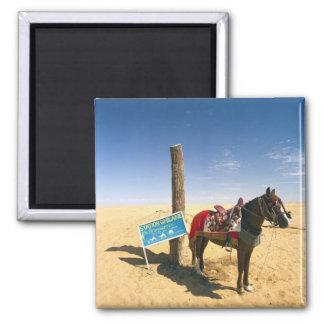 Tunisia, Ksour Area, Ksar Ghilane, horse in the Square Magnet