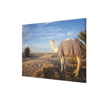 Tunisia, Sahara Desert, Douz, Great Dune, camel, Canvas Print