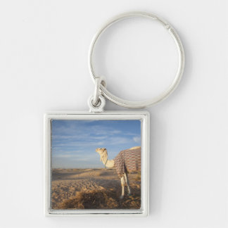 Tunisia, Sahara Desert, Douz, Great Dune, camel, Key Ring