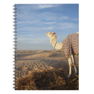 Tunisia, Sahara Desert, Douz, Great Dune, camel, Notebook