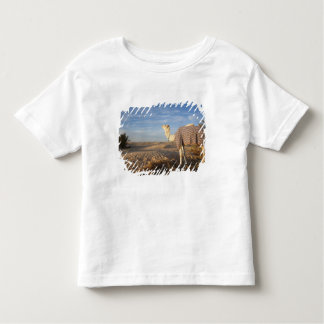 Tunisia, Sahara Desert, Douz, Great Dune, camel, Toddler T-Shirt