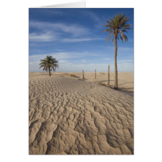 Tunisia, Sahara Desert, Douz, Great Dune, dawn Card