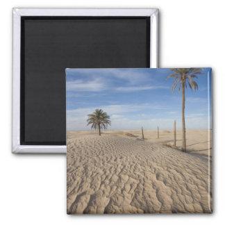 Tunisia, Sahara Desert, Douz, Great Dune, dawn Magnet
