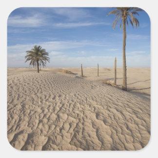Tunisia, Sahara Desert, Douz, Great Dune, dawn Square Sticker