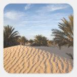 Tunisia, Sahara Desert, Douz, Great Dune, palm 2