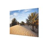 Tunisia, Sahara Desert, Douz, Great Dune, palm 2 Gallery Wrap Canvas