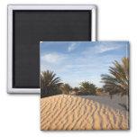 Tunisia, Sahara Desert, Douz, Great Dune, palm 2 Square Magnet