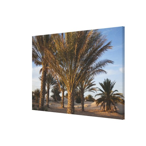 Tunisia, Sahara Desert, Douz, Great Dune, palm Gallery Wrapped Canvas