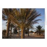 Tunisia, Sahara Desert, Douz, Great Dune, palm Greeting Card