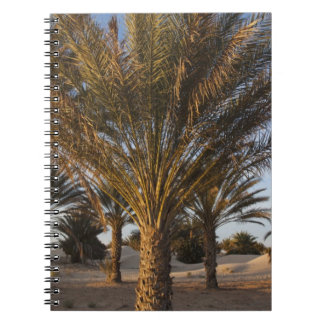 Tunisia, Sahara Desert, Douz, Great Dune, palm Notebooks