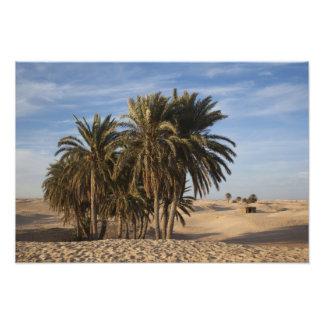Tunisia, Sahara Desert, Douz, Great Dune, palm Photo Print