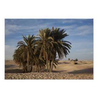 Tunisia, Sahara Desert, Douz, Great Dune, palm Poster