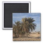 Tunisia, Sahara Desert, Douz, Great Dune, palm Square Magnet