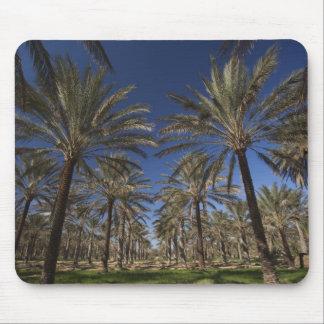 Tunisia, Sahara Desert, Douz, Zone Touristique, 2 Mouse Pad