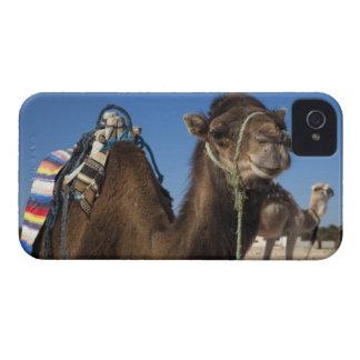 Tunisia, Sahara Desert, Douz, Zone Touristique, iPhone 4 Cases