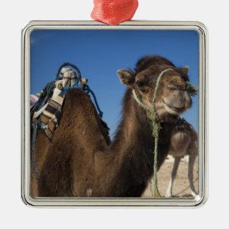 Tunisia, Sahara Desert, Douz, Zone Touristique, Silver-Colored Square Decoration