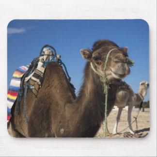 Tunisia, Sahara Desert, Douz, Zone Touristique, Mouse Pad