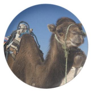Tunisia, Sahara Desert, Douz, Zone Touristique, Plate