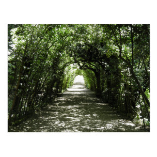Tunnel of Green Postcard