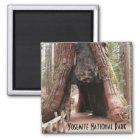 Tunnel Tree- Yosemite Magnet