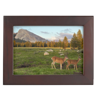 Tuolumne Meadow, Yosemite Keepsake Box
