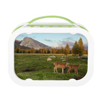 Tuolumne Meadow, Yosemite Lunch Box
