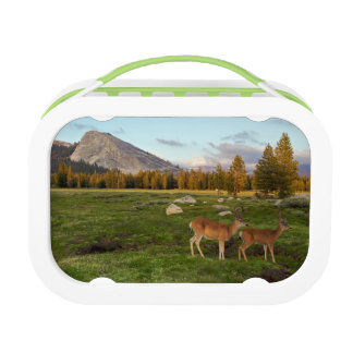 Tuolumne Meadow, Yosemite Lunch Boxes