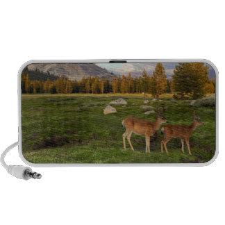 Tuolumne Meadow, Yosemite Travel Speakers
