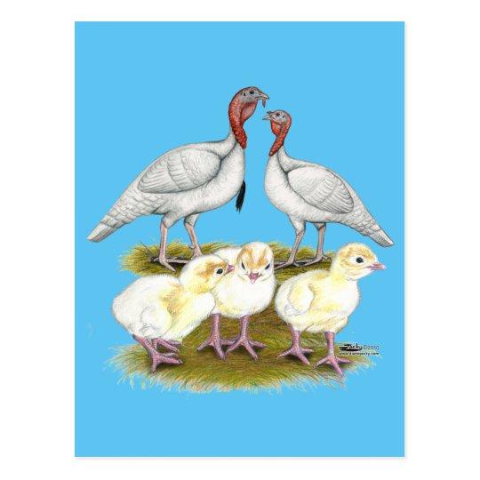 Turkey Mini White Family Postcard