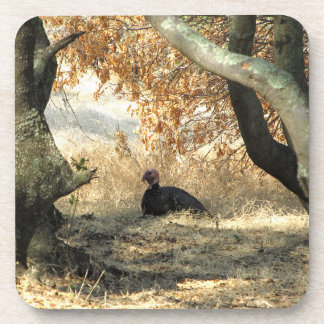 Turkey Paraside Coasters