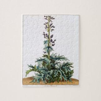 Turkey rhubarb plant puzzles