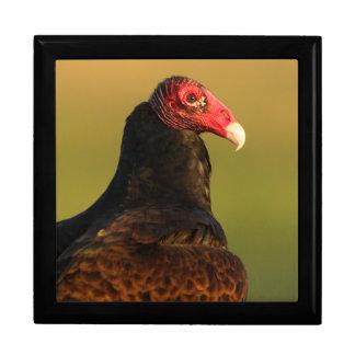 turkey vulture large square gift box