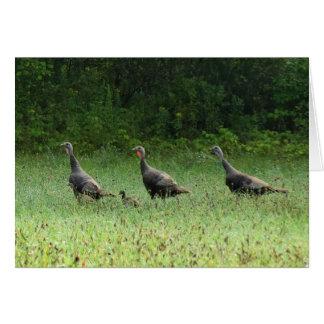Turkeys Card