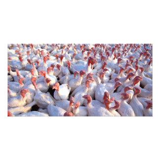 Turkeys Photo Card Template